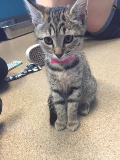 Little Addison, big world (Adopted)