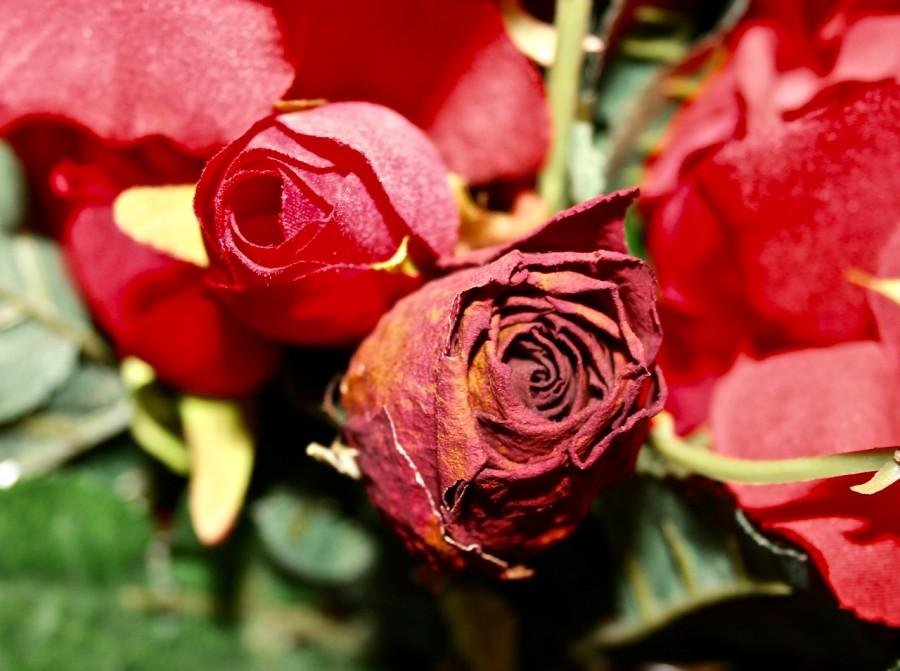 %22This+piece+is+called+%22True+Beauty%22-+It+shows+two+roses%2C+one+real%2C+and+one+fake.+While+the+fake+rose+is+perfect+in+all+regards%2C+the+real+rose+is+shriveled%2C+discolored%2C+and+has+many+imperfections.+This+goes+to+say+that+although+we+all+have+imperfections%2C+it+is+these+imperfections+that+make+us+real%2C+and+no+matter+what%2C+we+should+be+true+to+ourselves.%22+-Natasha+Ramaswamy