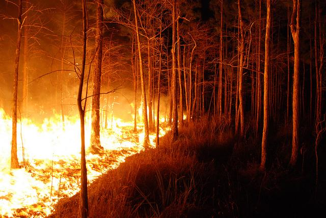 Wildfires span across miles of the northern Georgia forests.