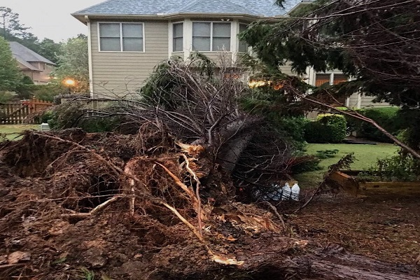 A gigantic tree behind Lambert freshman, Morgan Quach's, house was completely uprooted and destroyed due to Tropical Storm Irma.