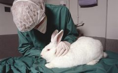 Should we test on animals for commercial and medical advancements?